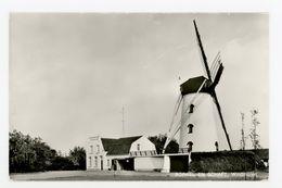 D317 - Borkel En Schaft Windmolen - Uitg JosPe - Molen - Moulin - Mill - Mühle - Pays-Bas