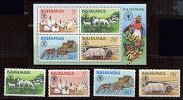 **  Bahamas   N° 488 à 491 - Bloc 50   Contre La Faim - Against Starve