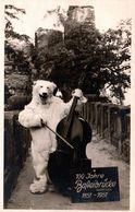 Photo Originale Déguisement D'Ours Blanc Polaire & Eisbär Musicien Contre-Bassiste - 100 Jahre Basteibrücke 1851/1951 - Anonieme Personen