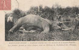CPA 86 (Vienne) ST JULIEN D'ARS / OUBANGUI / ELEPHANT TUE A LA MISSION DE LA STE FAMILLE / LES DEFENSES SONT  AU CHATEAU - Saint Julien L'Ars