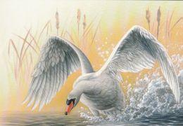 BUZIN. CYGNE TUBERCULE - 1985-.. Birds (Buzin)