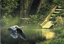 BUZIN.  HERON CENDRE - 1985-.. Oiseaux (Buzin)