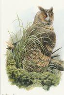 BUZIN.  HIBOU MOYEN DUC  LES YEUX DE BRAISE - 1985-.. Birds (Buzin)