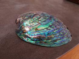 Ormeau - Seashells & Snail-shells