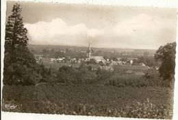 Cpsm Pf -  49 -  CHALONNES SUR LOIRE - Vue  Panoramique   128 - Chalonnes Sur Loire