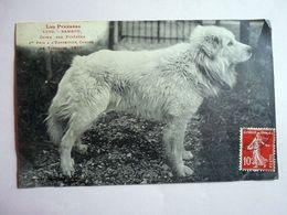 CPA LES PYRENEES BAMBOU CHIEN DES PYRENEES 1ER PRIX A L EXPOSITION CANINE DE TOULOUSE 1908 - Perros