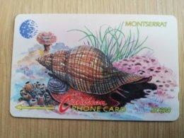 MONTSERRAT  $20,-   TULIP SNAIL   MON-7B 7CMTAB   FINE USED CARD     ** 1294 ** - Montserrat