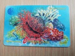 MONTSERRAT  $20,-   ROUGH FINE SHELL   MON-7C 7CMTAC   FINE USED CARD     ** 1295 ** - Montserrat