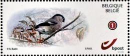 Zelfklevende MyStamp Goudvink - 1985-.. Vögel (Buzin)