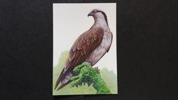 """BUZIN - Carte Oiseaux B : Numéro 4090 """"Balbuzard Pêcheur"""" - Maximum Cards"""