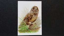 """BUZIN - Carte Oiseaux B : Numéro 4218 """"Hibou Des Marais"""" - Maximum Cards"""