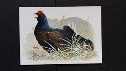 """BUZIN - Carte Oiseaux B : Numéro 4305 """"Tétras Lyre"""" - Maximum Cards"""