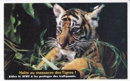 TIGRE DU BENGALE (bébé), République Indienne, Bengladesh, Halte Au Massacre Des Tigres  WWF Carte Souple 1990 Environ - Tigres