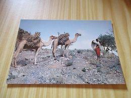 CPM Djibouti - Chamelier. - Djibouti