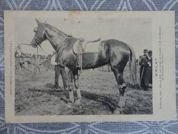 CHEVAL COURSE HIPPIQUE  .KELAT, TROTTEUSE , Née En 1910,par  Diable Et Cosette DURAND DE FOUSSAIS VENDEE - Chevaux