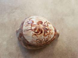 Coquillage Avec Gravure D'un Poulpe - Seashells & Snail-shells