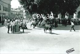 PHOTO GEORGE CAMARGUE CHEVAUX GARDIANS TAUREAUX - Nîmes