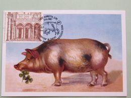ITALIA, Veterinaria, 29-6-2007 Ann. Spec. Maiale, Pig, Porc, Schwein, Scuola Spec. Patol. Suina Univ. Torino (3124-1) - Ferme