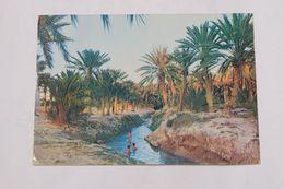 Oasis  De GABES - Tunisie