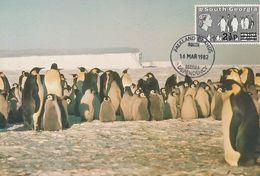 Falkland Dep. 1982 - Manchot - Penguin - Pinguin - Emperor Halley - Oiseaux