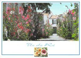17 - Ile De Ré - Les Ruelles Fleuries - Ile De Ré