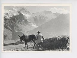 Hommes, Ane Tirant Le Foin, Haute Montagne- Un Certain Regard - Bernard Grangé Photographe -  N°908 Expo Valloire - Paysans