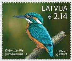 Latvia Lettland Lettonie 2020 (08-2) Birds Of Latvia - Common Kingfisher - Latvia