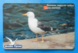 Russia Larus Marinus Seagull Bird Vogel Pajaro Birds Ekaterinburg - Andere