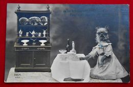 CPA Chien Humanisé - 1913 - Animali Abbigliati