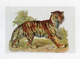 Découpis . Tigre . Tiger . Tigris - Animals