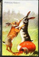 Illustration  Lapin Rabbit Combat - Animali