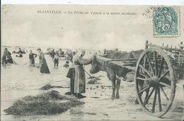 BLAINVILLE - La Pêche Au Varech à La Marée Montante (attelage De Bœuf) - Blainville Sur Mer