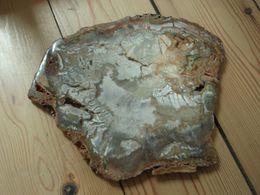 Bois Pétrifié - Fossilisé - Nouvelle-Calédonie. - Minerali