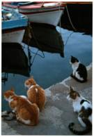 CPM - CHATS Qui Posent - Photographe Anonyme - Edition ? - Chats