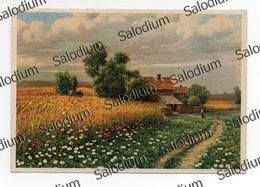 A. BERTIGLIA Illustratore Paesaggio Campagna Agricoltura Cascina - Bertiglia, A.