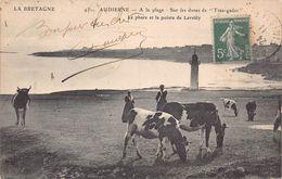 """AUDIERNE  - A La Plage - Sur Les Dunes De """" Trez -gadec """"- Le Phare Et La Pointe De Lervilly ( Animée  .vaches ) - Audierne"""