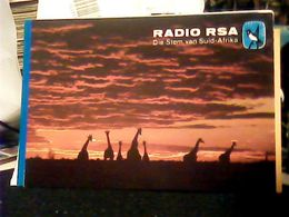 QSL RADIO CARD - RADIO RSA. THE VOICE OF SOUTH-AFRICA 1980 HQ9486 - Radio