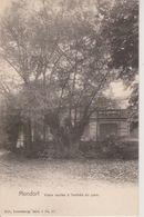 MONDORF - VIEUX SAULES A L'ENTREE DU PARC - NELS SERIE 3 N° 27 - Mondorf-les-Bains