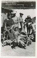 Real Photo Chichicastenango Pigs To Market  Foto Stein  Stamp . Indios - Guatemala