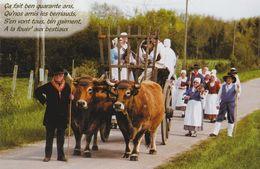 Les Berriauds De Vierzon ( Attelage Folklore Vaches ...) - Vierzon