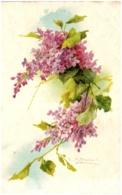 C. KLEIN - Fleurs - - Klein, Catharina