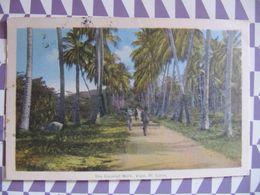 CPA - THE COCONUT WALK - VIGIE, ST. LUCIA - 1945 - Sainte-Lucie