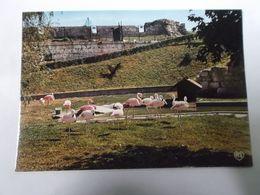 ZOO De La Citadelle    Les Flamants Roses - Besancon