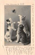 Animaux - N°67990 - Chats Jouant Avec Une Mouche - Chats