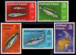 Falkland Islands, 1981, Fish, Animals, Fauna, MNH, Michel 336-340 - Falkland Islands