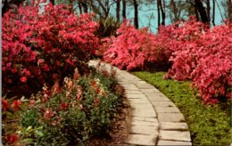 Louisiana Jefferson Island Rip Van Winkle Gardens - Etats-Unis