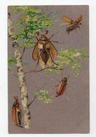 HANNETONS * HANNETON * ARBRE/BOULEAU * HUMANISES * Carte Argentée - Insecten