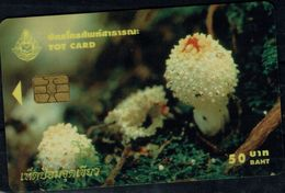 THALAND 2004 PHONECARD MUSHROOMS USED VF!! - Thaïlande