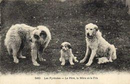 Les Pyrénées CHIENS  Le Père , La Mère Et Le Fils RV - Chiens