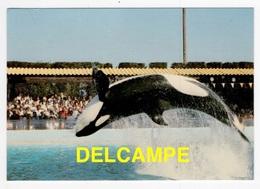DF / ANIMAUX / CÉTACÉS / ORQUE AU MARINELAND D'ANTIBES (06) EN 1985 - Animali